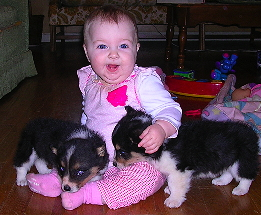 Laura with tricolor corgis